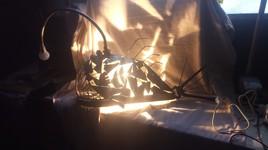 Poisson lanterne abyssal