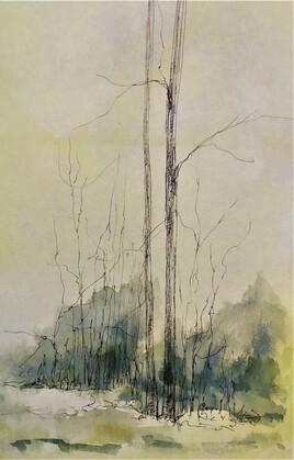 Forêt 19