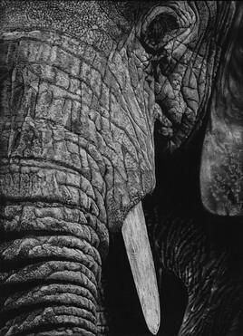 L'élephant.
