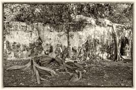 La prison emprisonnée 11 (Petit Canal - Guadeloupe) tirage dibond® 40 x 60 cm