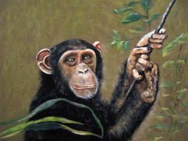 Un Chimpanze 2