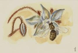 La bourrache et l'abeille