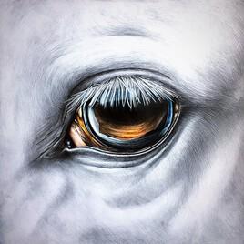 L'oeil du cheval