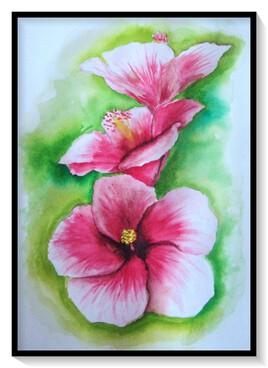 Les Hibiscus