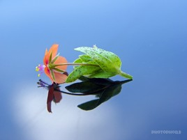 Reflets de fleurs 3