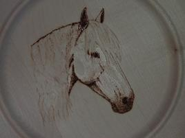 tête cheval blanc