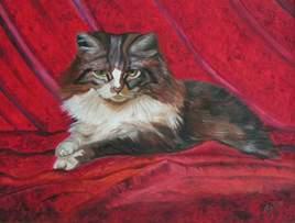 Le chat de velours