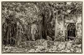 La prison emprisonnée 13 (Petit Canal - Guadeloupe) tirage dibond® 40 x 60 cm