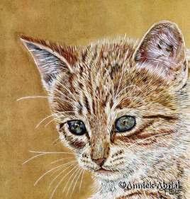 Le chaton curieux