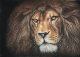 Mango, le Lion