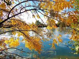 bord de Seine en automne..