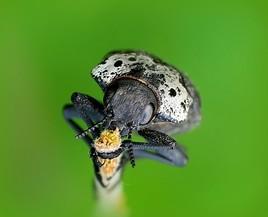 insecte!!!!