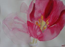 tulipe roses