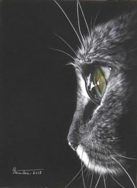 chat dans pénombre 7