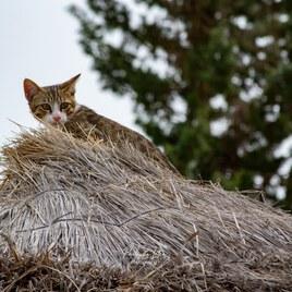 Chat sur le toit