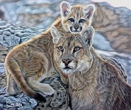 Maman Puma avec son Bébé