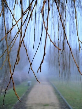 Ouverture vers le brouillard