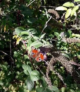 Papillon et nature