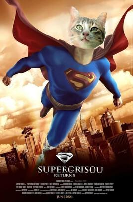 mon chaton en Superman  :)