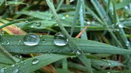 """Perles de pluie"""