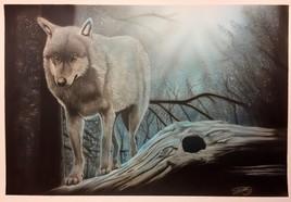 Loup dans sous-bois