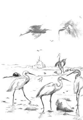 Retour à Saint-Jean-Le-Thomas, les oiseaux de la baie.