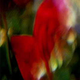 Prisme et Spectre Hyménée 05