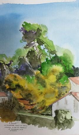 mimosa allée des érables