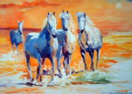 féérie de chevaux au soleil couchant de camargue