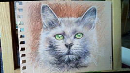 Chat Blanc - crayons couleur