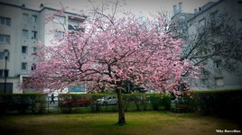 Printemps arbre fleuri