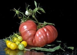 La récolte du jour ou l'Origine du monde