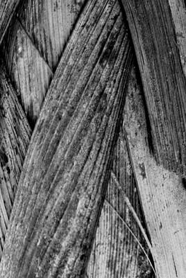 Texture II