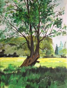 odilk tree