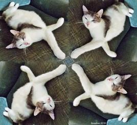 MiouMiou s'adonne à la géométrie :)