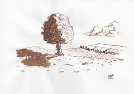 Brou de noix - Un arbre