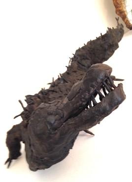 crocodile récupéré