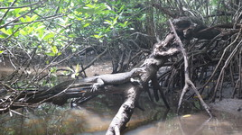 varan dans ma jungle de sri Lanka