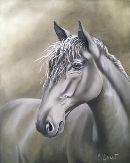 Profil équin