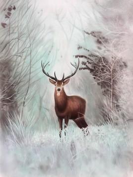 Cerf paysage hivernal