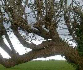 arbre qui ouvre ses bras!!!