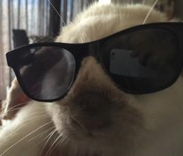 Hi, baby, I'm a cool rabbit
