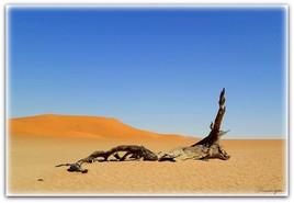 Y aurait- il eu des cerfs dans le désert ?