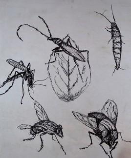 Ensemble d'insecte