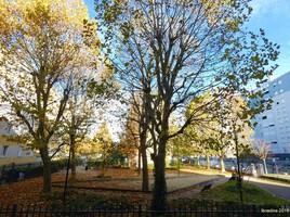 De ma fenêtre...comme un arbre dans la ville.. Maxime Le Forestier.