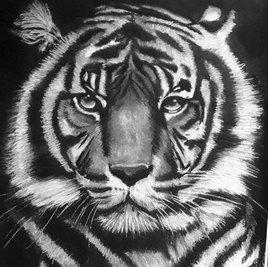 tete de tigre