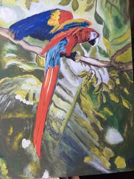 Perroquet des îles