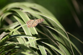 Butterfly nature photography - IMG_0419 -
