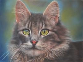Marlon, le Chat