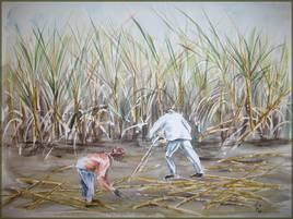 les coupeurs de canne à sucre